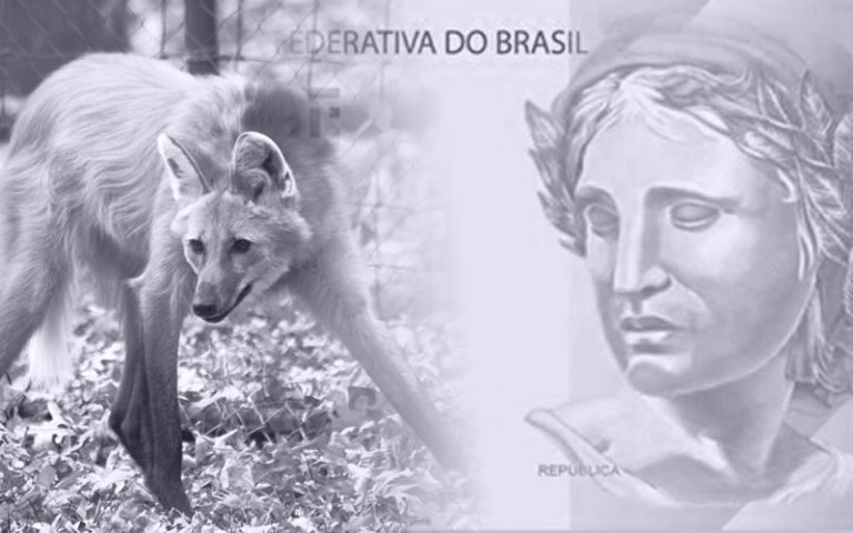 Nota de 200 reais Lobo guará