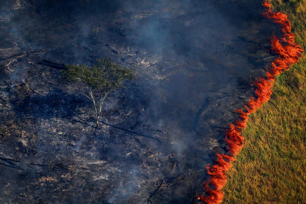 Desmonte ambiental: desmatamento, investidores e novas pandemias